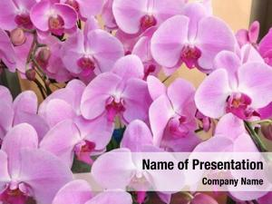 Pink orchid flowers,beautiful flowers close
