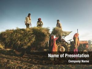 Farming india family harvesting crops