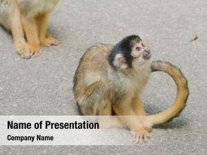 Park squirrel monkey