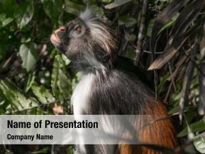 Ape curious shaggy tree jozani