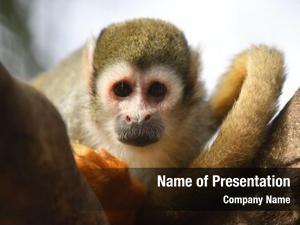 Sitting squirrel monkey branch