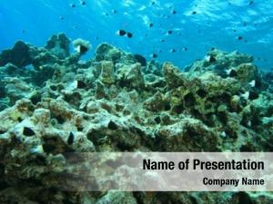 Dead environmental problem: coral reef