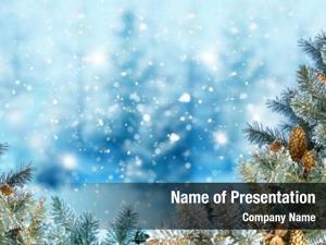 Fir winter christmas tree branch