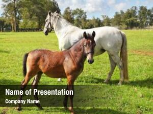 His white horse bay colt