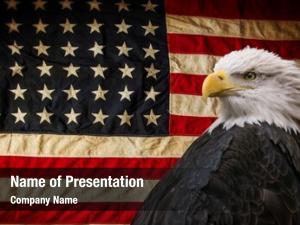 Eagle american bald symbol america