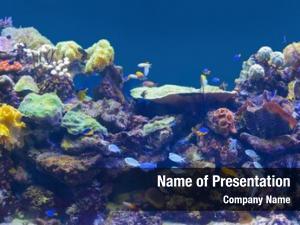 Marine reef tank, aquarium