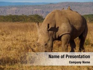 Mara rhinos masai park, kenya