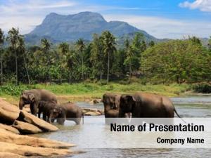 Swim elephants herd lake water