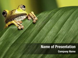Looking tree frog over green