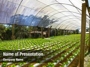 500 Hydroponics Powerpoint Templates Powerpoint Backgrounds For Hydroponics Presentation
