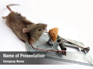 Mouse mouse captured trap