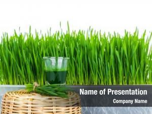 Wheat shot glass grass fresh