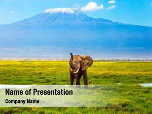 Landscape giraffe savanna mount kilimanjaro