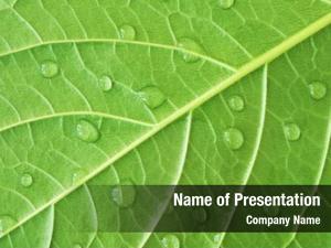 Dew green leaf