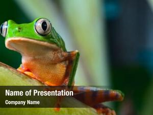 Brazil tree frog tropical amazon