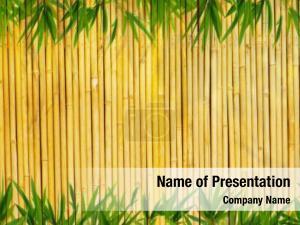 Plant bamboo green border
