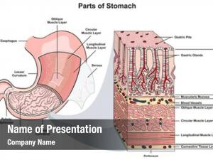 Infographic parts stomach diagram including