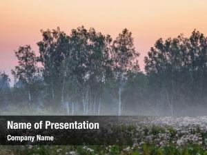 Summer foggy sunset field