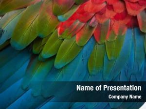 (ara green winged macaw chloropterus), also
