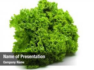 Lettuce fresh salad (frilled lettuce)