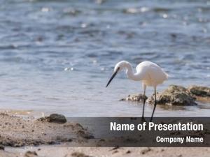 Water egret play land