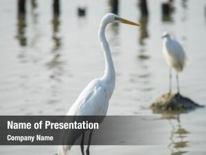 Water egrets play land