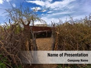 Fence maasai thorny made acacia