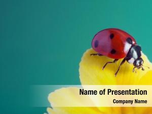 Yellow red ladybug flower, ladybird