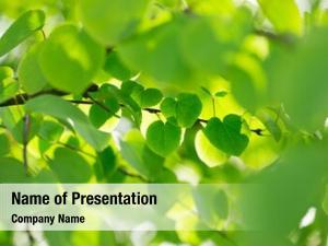 Leaves, fresh green spring theme