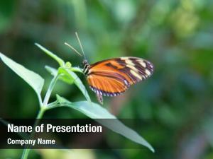 Simply monarch butterfly monarch (danaus