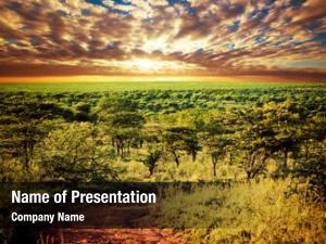 Landscape serengeti savanna road sunset