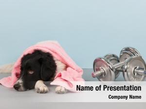 Dumbbells dog towel health club