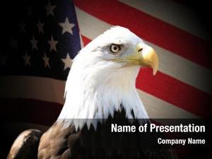 Over bald eagle flag