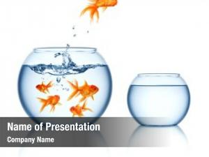 Out goldfish jumping fishbowl