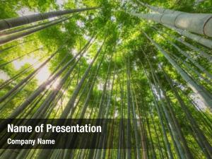 Bamboo bamboo grove, forest arashiyama,