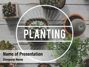 Botany green plants planting hobby