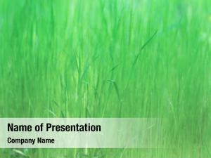Soft earl spring tall grass