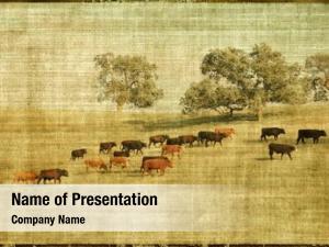 Landscape vintage style cows pasture