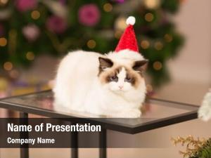 Winter christmas party, holidays cat