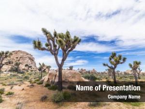Landscape classic desert joshua tree