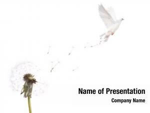 Flying old dandelion dove white