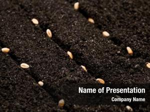 Growth seeds wheat