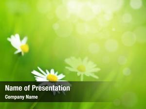 Sunny daisy flowers meadow