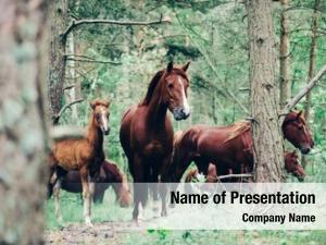 Horses herd brown walking green