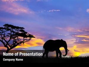 Wild elephant silhouette