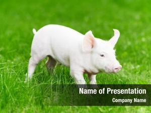 Piglet one young green grass