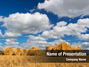Hay landscape golden rolls french