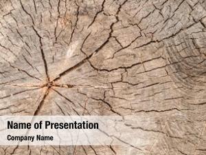 Stump texture tree