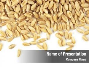 Pieces wheat grain white