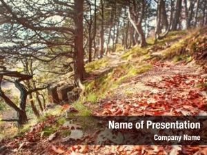 Woods path autumn